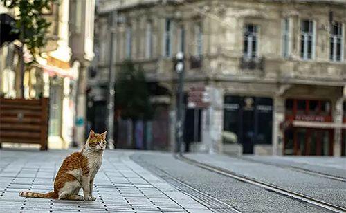 Türkiye'de sokağa çıkma yasağı var mı?